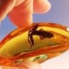 Омичам покажут доисторических насекомых в янтаре