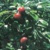 Землевладельцам Омска следует позаботиться о защите урожая от небольших морозов