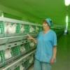 Инновации Иртышской птицефабрики вывели отечественное птицеводство на новый уровень
