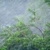 По Омской области пройдут сильные дожди и грозы