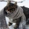 На выходных в Омске будет до -14 градусов