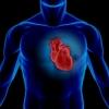 Сердца омичей  проверят бесплатно