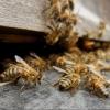 В Омской области полицейские вернули пчелиную семью пенсионеру