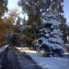Омск ожидает теплая неделя с туманами и снегом
