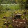 В омском регионе пропали грибник и ягодник