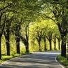 """Омский парк """"Зеленый остров"""" станет более доступным для спортсменов"""