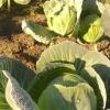 По Омской области температура на почве может упасть до -5 градусов
