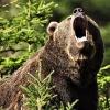 В Финляндии медведь сорвал учения солдат
