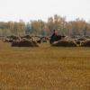 Более 956 миллионов рублей дополнительно направят на развитие АПК Омской области