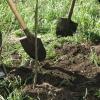 Омчиам покажут, как посадить дерево, чтобы оно прижилось