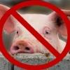 Омским фермерам дадут почти 100 млн рублей за отказ от разведения свиней