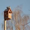"В ""Птичьей гавани"" встретят отдохнувших на юге птиц"