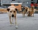 Соседи пожаловались на собачью жизнь