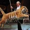 Директор Омского цирка заявила, что тигров любят и хорошо за ними ухаживают