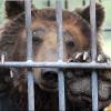 Омича с откушенной медведем рукой не выпускают из реанимации