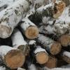 В Омской области орудовала банда черных лесорубов