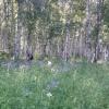 В Омской области найдены заблудившиеся в лесу мать с трехлетней дочкой