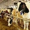 Омские аграрии получат более 163 миллионов рублей на растениеводство и молочное животноводство