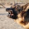 В Омске выгул собаки обошелся пенсионеру в 40 тысяч рублей