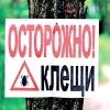 Омские кладбища заражены клещами
