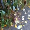 В Омске заморозки – пришло время менять резину