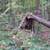 1,5 тысячи жителей Омской области вышли на очистку леса от валежника