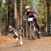 В Омске прошли соревнования по  бесснежным дисциплинам ездового спорта