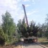 Озеленение парка 300-летия Омска продолжится в рамках общегородского субботника