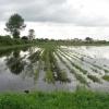 Омские аграрии опасаются за свой урожай