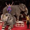 В День города индийские слоны выступят перед омичами бесплатно