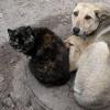 Омским районам выделят 7 миллионов рублей для отлова и содержания безнадзорных животных