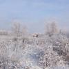 В Омской области наблюдается двукратное увеличение популяции лесных копытных животных