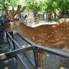 В парк 30-летия ВЛКСМ запустят оленей и wi-fi