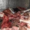 На границе с Казахстаном задержали 900 кг конины
