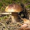 «Омск-пригород» обновил карту грибных мест к осени