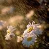 Всю неделю в Омске ожидается дождик