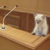 Кабы я был депутатом: омичи предложили свои варианты новых законов