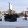 В Центральном округе омичи могут купить елки в девяти точках
