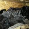 Омичи спасают 50 кошек, которых девушка оставила в съемной квартире