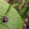 Более тысячи омичей уже пострадали от укусов клещей
