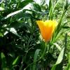 Жителей Омской области просят оберегать редкие первоцветы