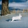 В Омской области пересчитают благородных оленей, росомах и рябчиков