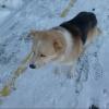 В Омске не станут отлавливать только адаптированных бездомных кошек и собак