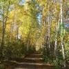 В начале октября температура в Омской области опустится до 0 градусов