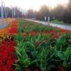 В Омске открылась выставка «Флора» и новый сквер героев-авиаторов