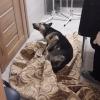 В Омске неизвестный сильно избил собаку