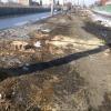Спил деревьев в Омске оказался запланированным обновлением