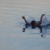 За 2017 года на омских водоемах произошло 8 несчастных случаев