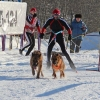 Хаски и маламуты отбуксируют своих хозяев на соревнованиях