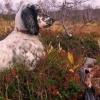 В Омской области открыли сезон охоты на дичь
